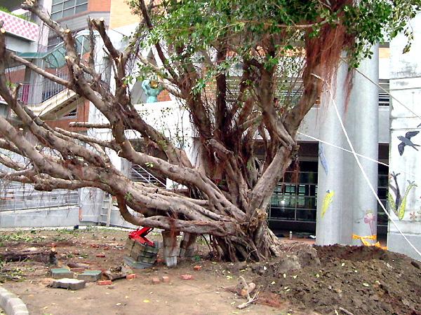 工程名称:树木移植及抢救